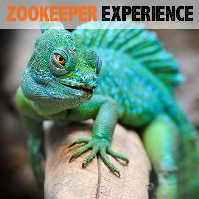 zookeeper-experience