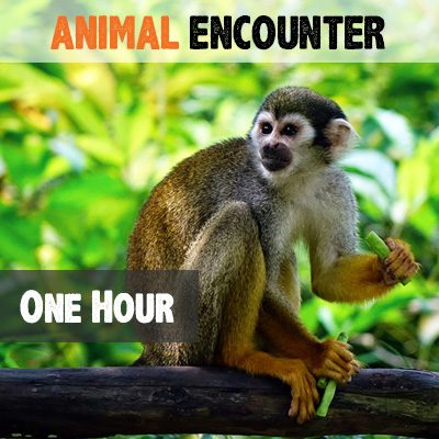 one-hour-animal-encounter
