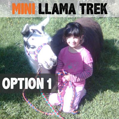 mini-llama-trek