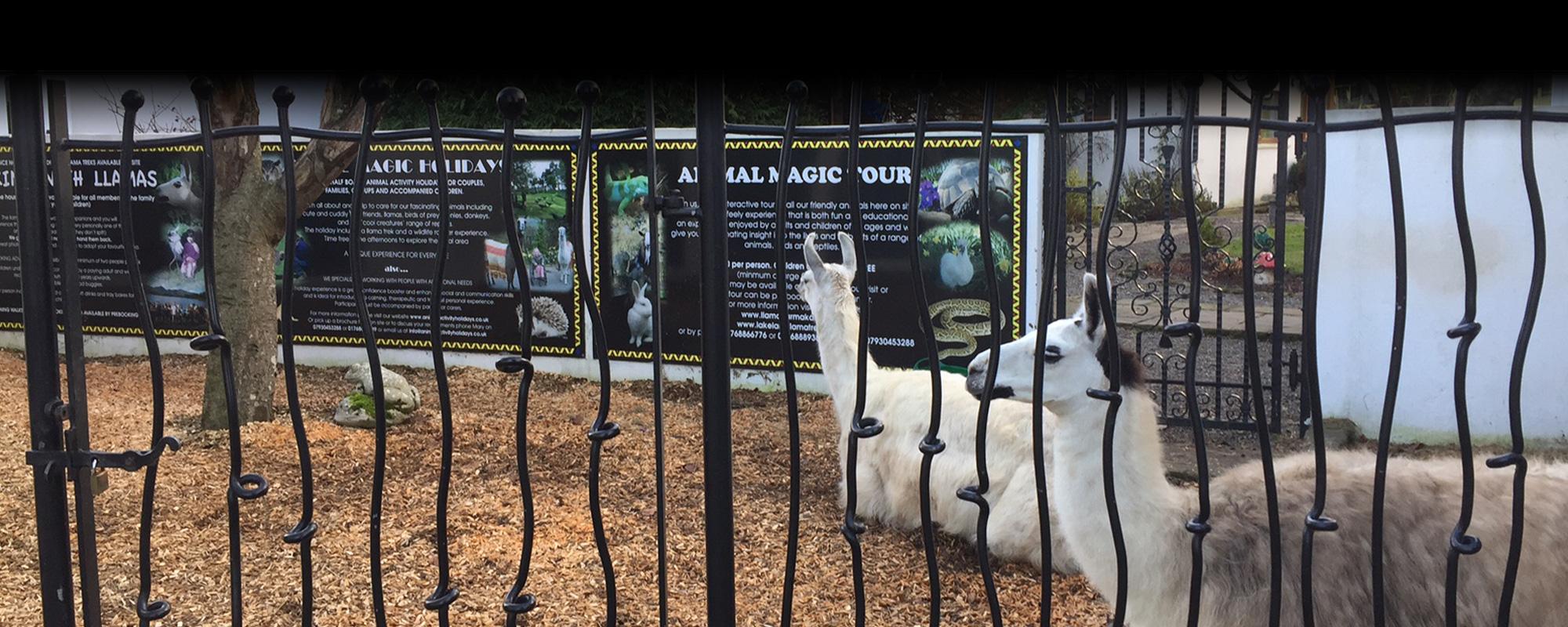 Lakeland Llama Trekking & Treks