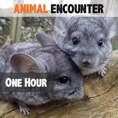 One Hour Animal Encounter