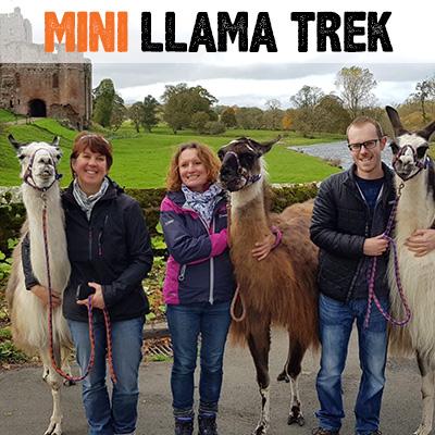 Mini Llama Trek - Lakeland Llama Treks