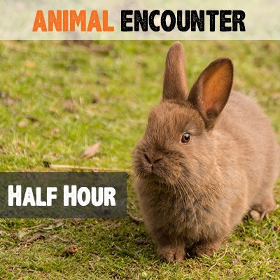 half-hour-animal-encounter