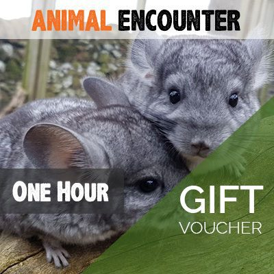 One Hour Animal Encounter Voucher