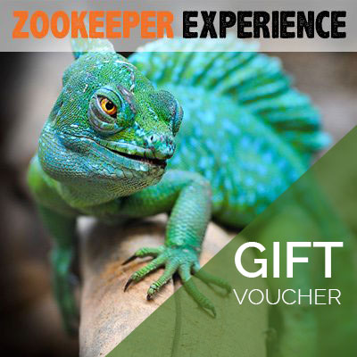Zoo Keeper Experience Voucher