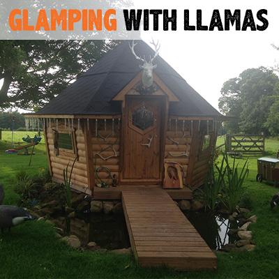 Glamping With Llamas