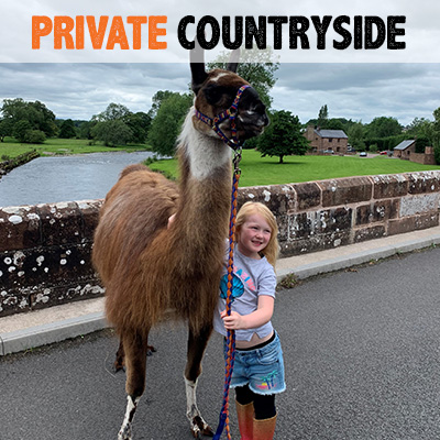 Private Countryside Llama Trek