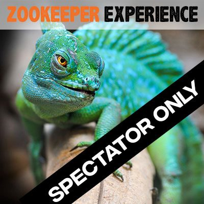 Zookeeper Experience - Spectator Only